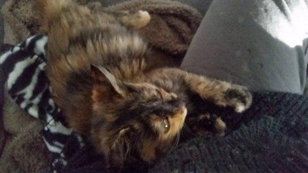 נמצאה גורת חתולים קטנה ומקסימה