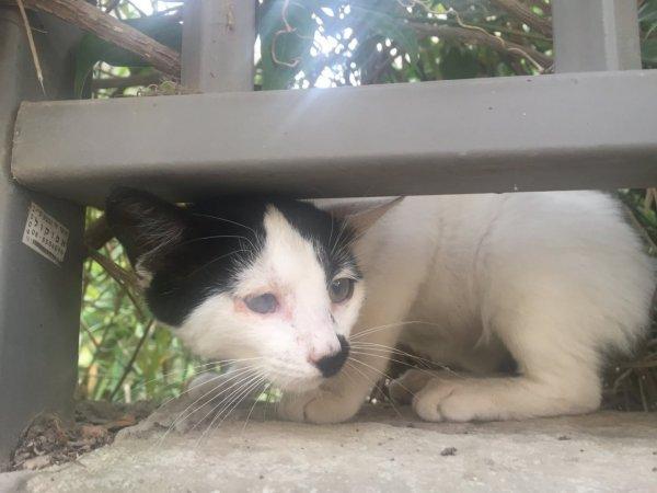גור חתולים מתוק מחפש בית
