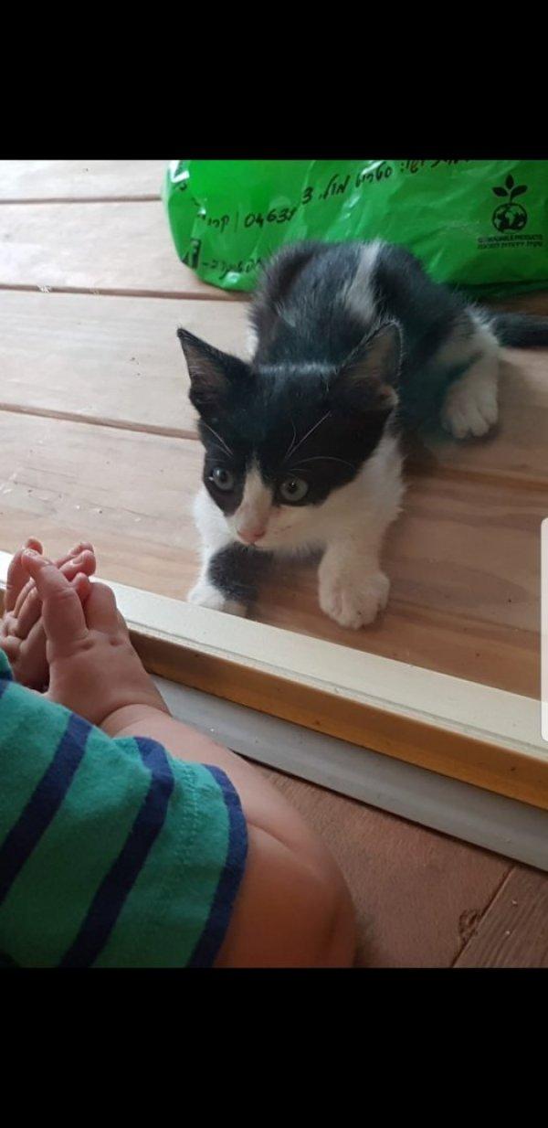 אולי ראיתם את החתול שלנו?
