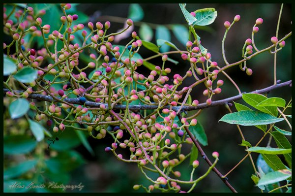 ׳׳חוכמת הצמחים׳׳ - הספר