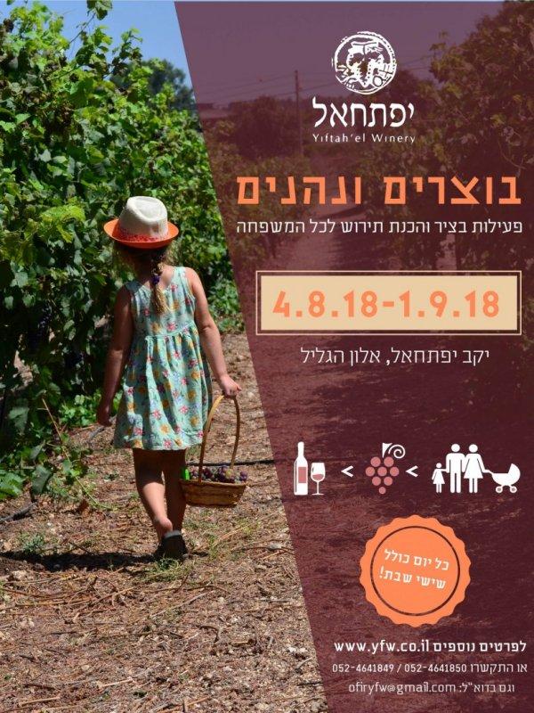 בוצרים ונהנים ביקב יפתחאל- חוויה חקלאית ומעשירה- מתחילים בשבת הקרובה- 4.8.18