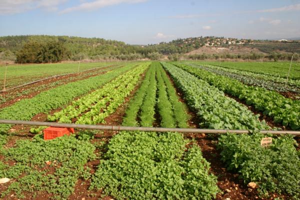 חוג חקלאות לילדים בימי שישי ב׳גן הבית׳