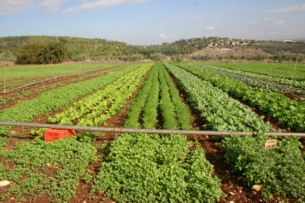 חוג חקלאות בגן הבית