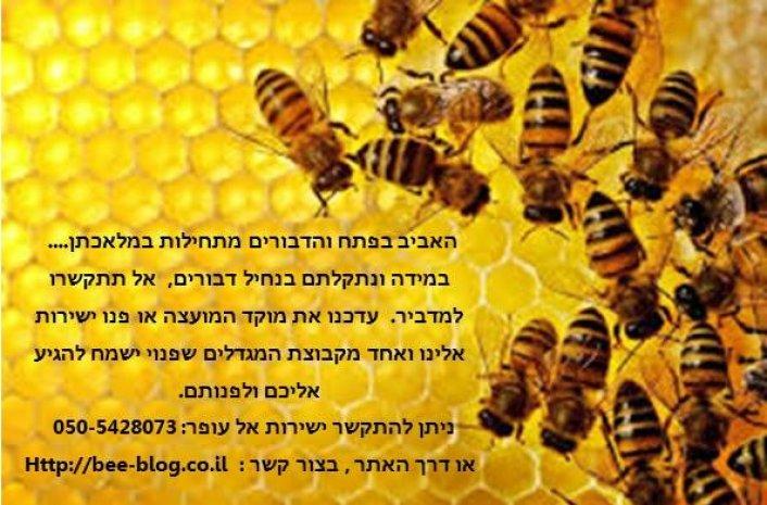 --- דבורים ונחילי דבורים ---