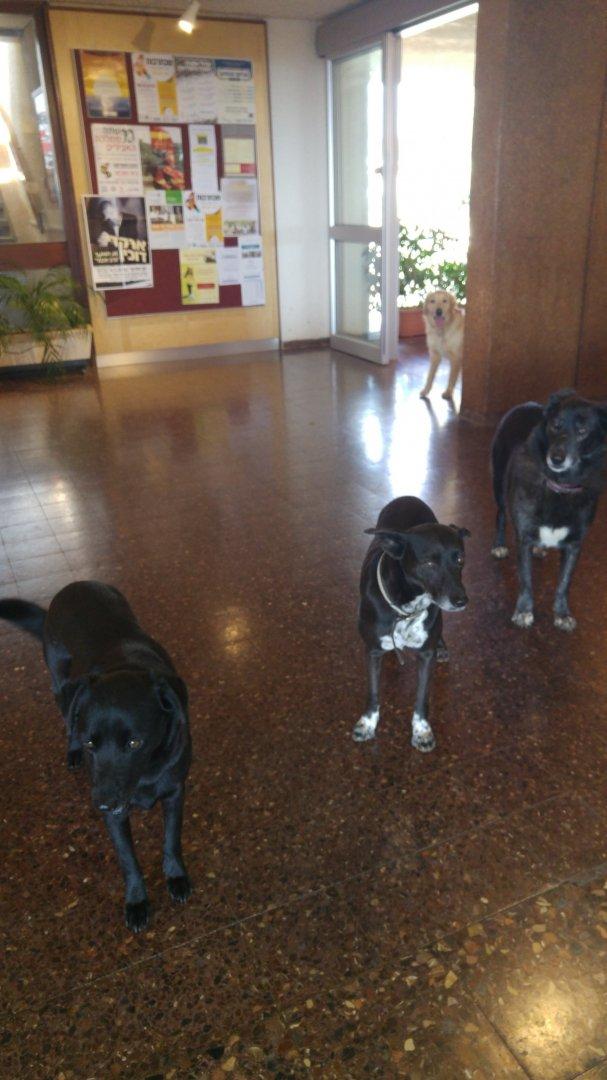 כלבים בחדר האוכל