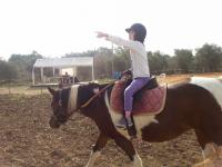 היום, יום שלישי פעילות פתוחה וחוויתית בחוות הסוסים של מירי - ללא עלות, בואו להתנסות ולהנות