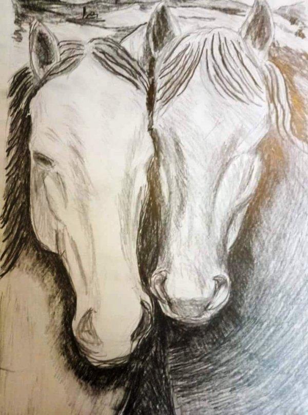 הסוסים שלי