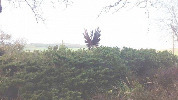 פסל הציפור של אבי שטיבי