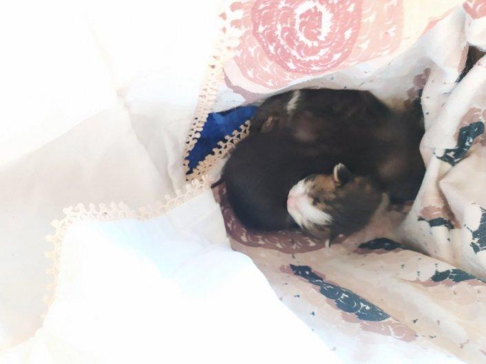 גורי חתולים לאימוץ