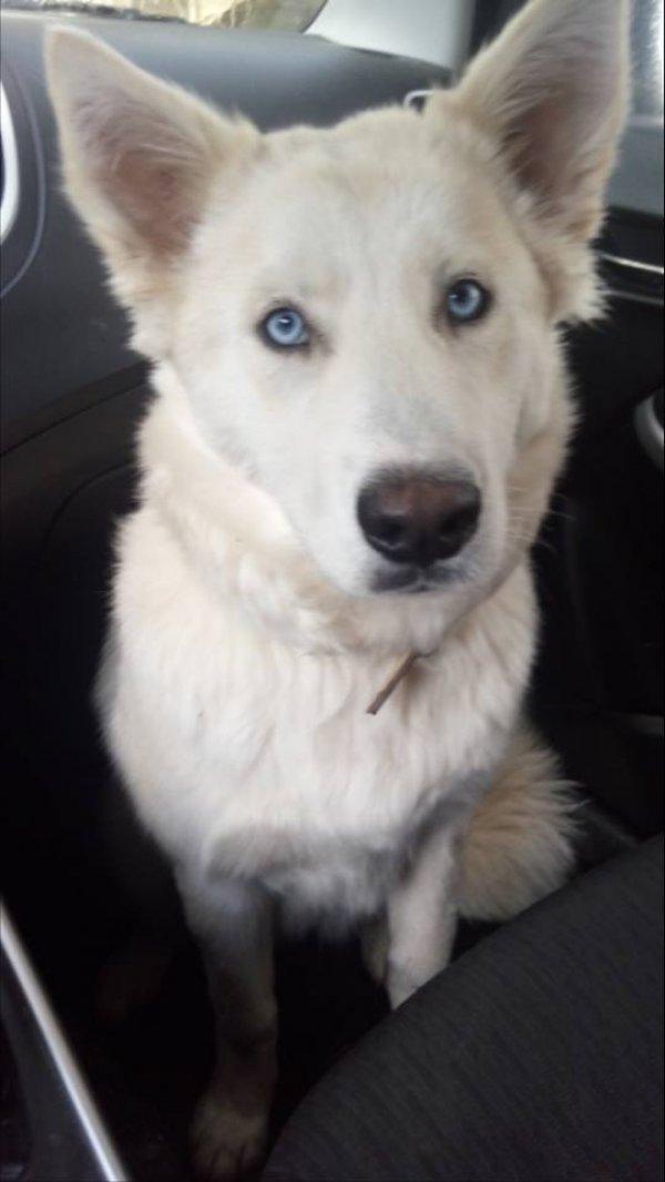 נאבדה כלבה... בבקשה עזרתכם