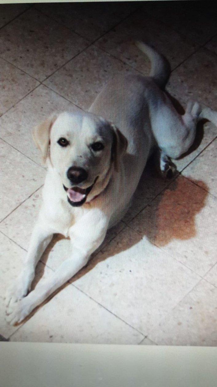 כלב לאימוץ - הכלב שייך לחברים טובים ומעביר בדיוק את מה שהם רשמו.