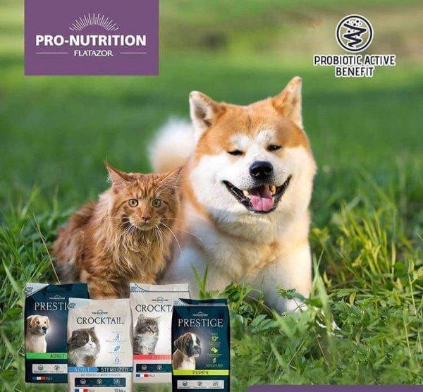 ויליג׳ פוד מזון כלבים וחתולים