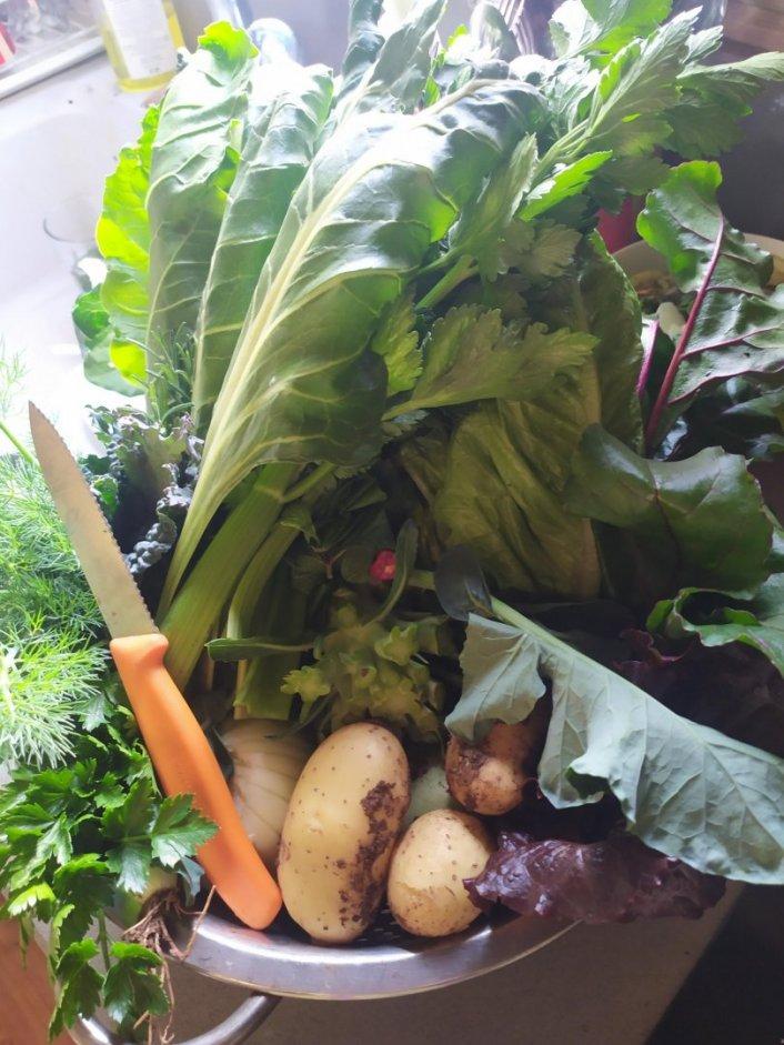 בואו לקטוף ירקות מהשדה ליד ביתכם ללא ריסוסים והכי טרי שיש