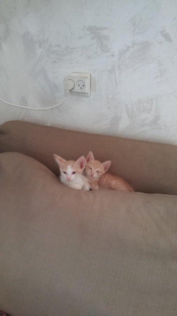 גורי חתולים ג׳ינג׳ים מחפשים בית