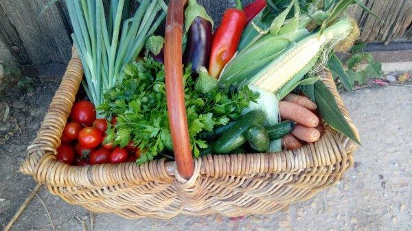 ירקות מגדלים בני אדם