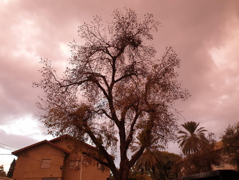 הפקאן ועננים חומים
