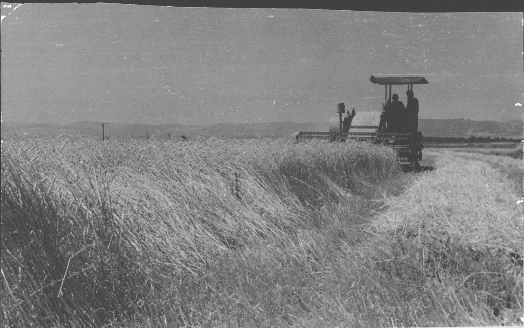 29 00381139 tif קציר בקומביין 1964
