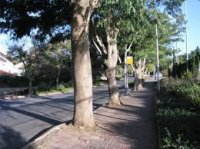 """סקירת עצים מסוכנים ע""""י אגרונום"""