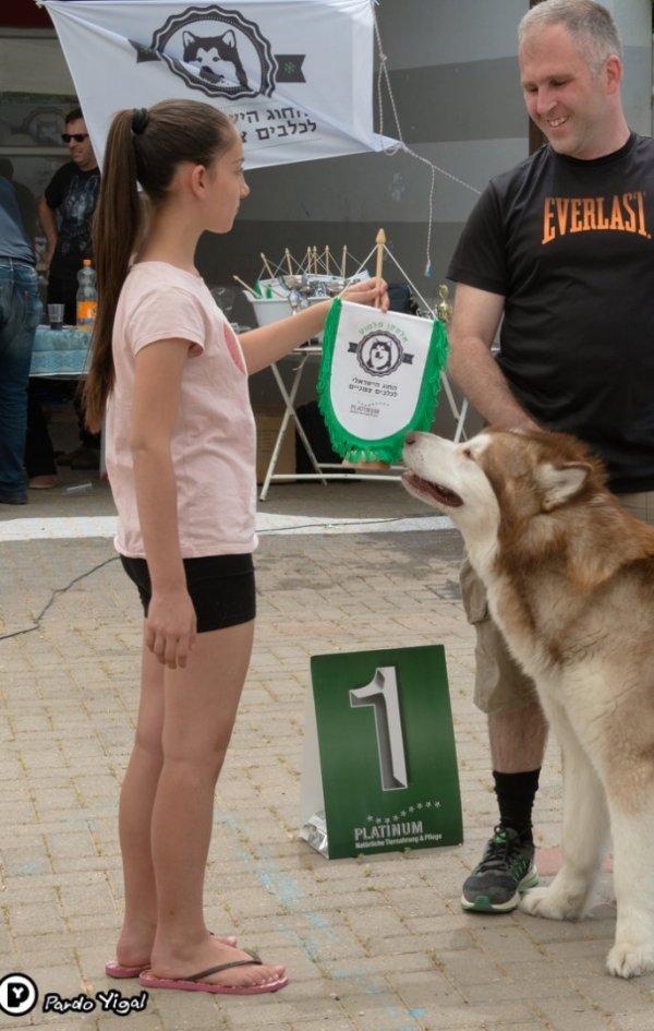תערוכת כלבים צפוניים בבית העם