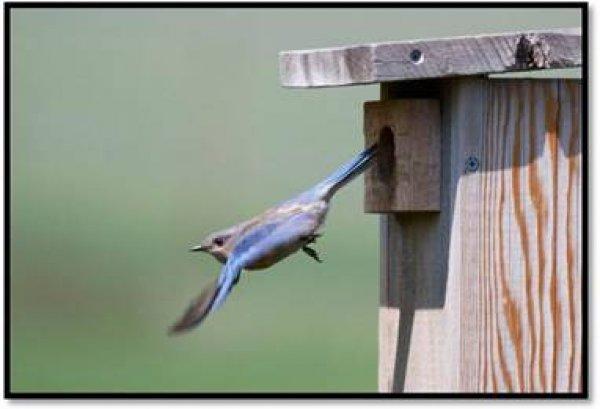 הרצאה בנושא ציפורים ותיבות קינון