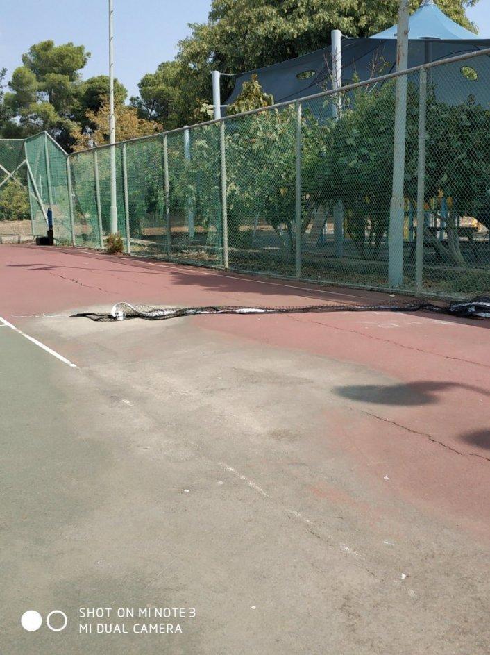 החזרת ציוד טניס למקומו