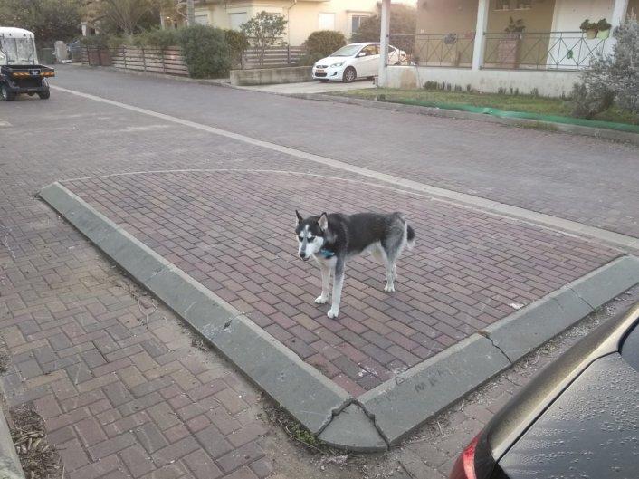 כלבים משוחררים- די נמאס!