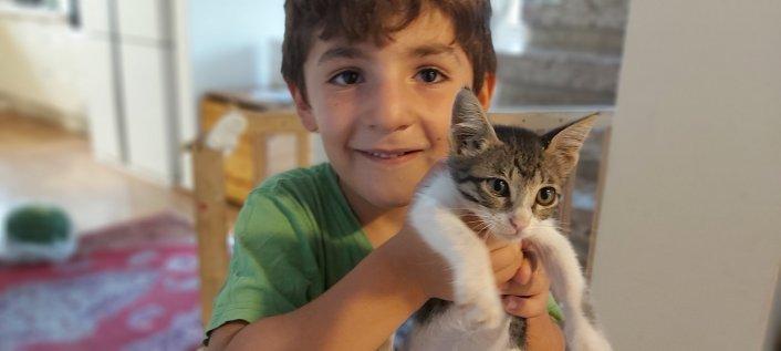 אבדה חתולה - נשמח לסיוע