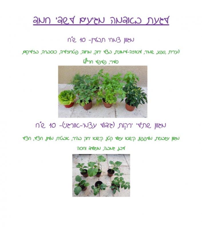 מכירת שתילי ירקות וצמחי תבלין