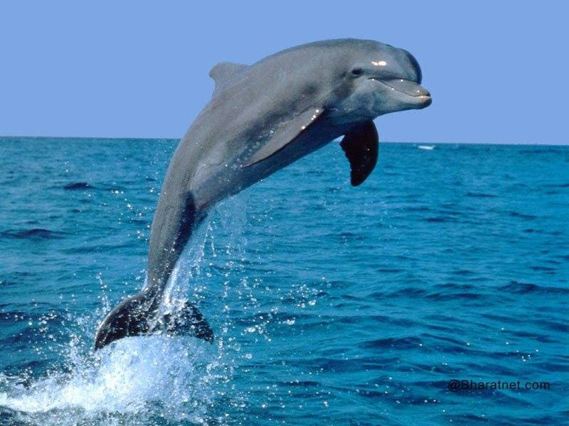 דולפין באויר
