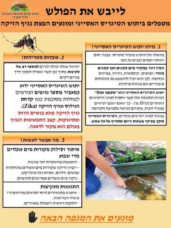יתושים- מניעה וטיפול